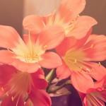 「地味につらい…!」秋の花粉症で注意すべき点とは…