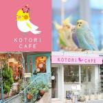 かわいいだけじゃない、スイーツも本格派!「ことりカフェ」関西地区にオープン!