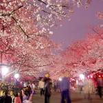 夜桜を観にいこう!2016「都内お花見スケジュールMAP」