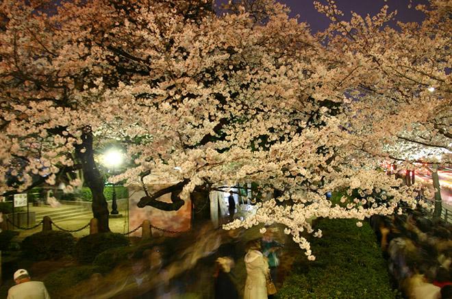 京都女子旅の魅力
