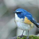 つまらない彼氏と別れたい……。恋愛の『青い鳥症候群』の特徴と克服法