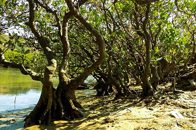 種子島マングローブパーク