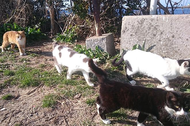 種子島の猫