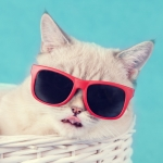 アナタはどの猫?いま「ファッショニスタキャッツ占い」がアツイ